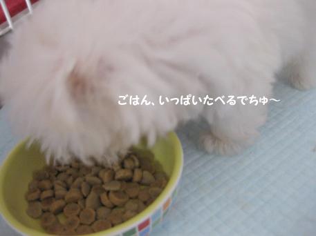 20090803-042.jpg