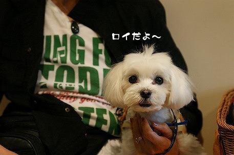 seikotan-DSC08672_s.jpg