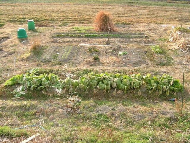 200601菜園
