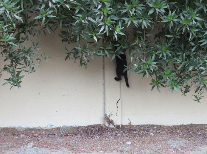 壁を登る猫2