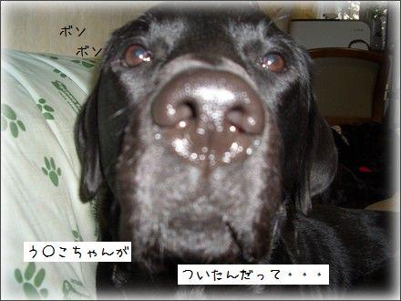 CIMG9529_2.jpg