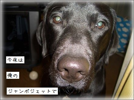 CIMG9546_5.jpg