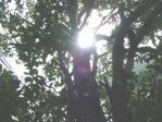 いい日陰になる木