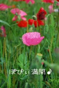 DSC_0540.jpg