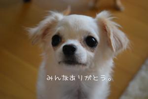 DSC_0642.jpg