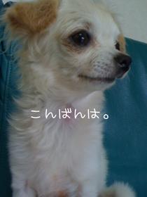 IMG_0833.jpg