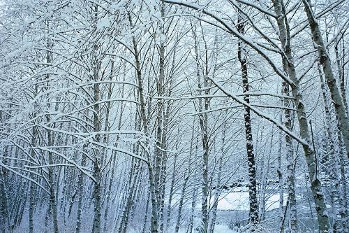 110212雪1675[1]