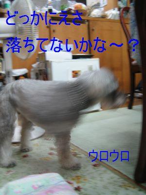 jtrimIMG_4366.jpg