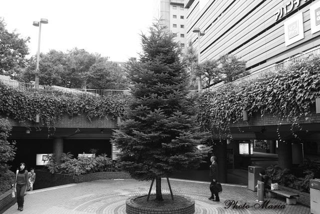 d2-08akimachi03.jpg