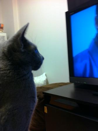 テレビを満喫中