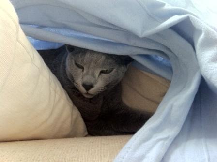 ぱる、昼睡