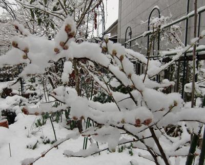 2010-3yuki.jpg