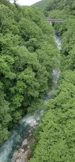 buru-riba-2010-6.jpg
