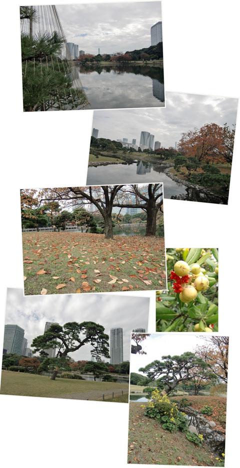 hamarikyu2010-11niwa.jpg