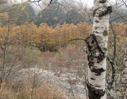 kamikouti2010-9kouyou.jpg