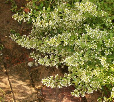karaminsa2010-8.jpg