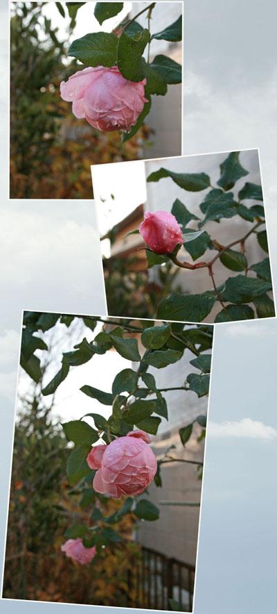 naema2010-11-30.jpg