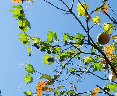 okisuzu2010-10-19-2.jpg