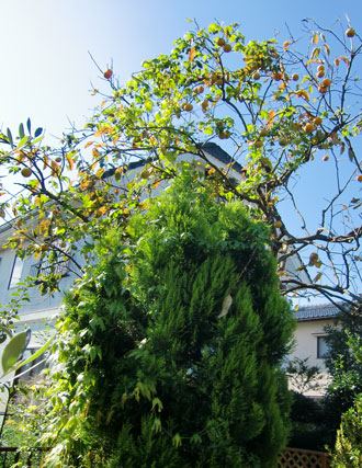 okisuzu2010-10-19.jpg