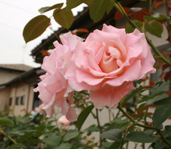rokoko2010-6.jpg