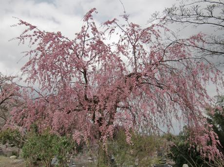sidare-tyoukeizi2010-4.jpg