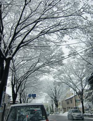 yuki2010-atago.jpg