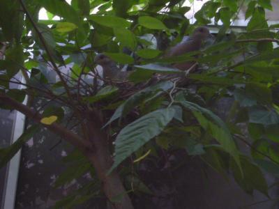 ハトの巣♪