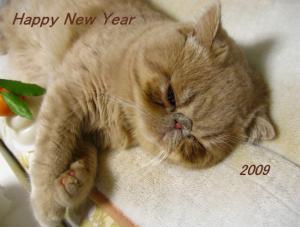 new year mameta 2
