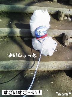 20090223-7.jpg