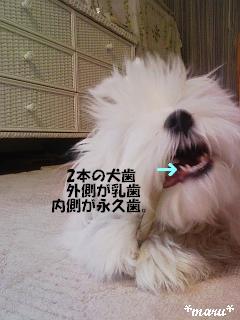 DVC00367_M.jpg