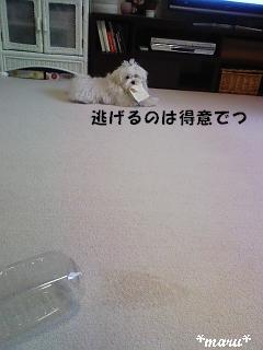 DVC00369_M.jpg