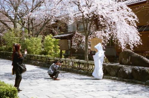 白無垢と桜