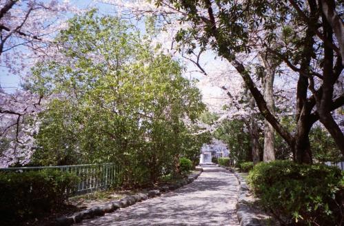 アリス風木のアーチ、春仕様