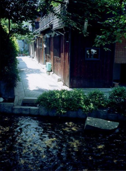 高瀬川の木漏れ日