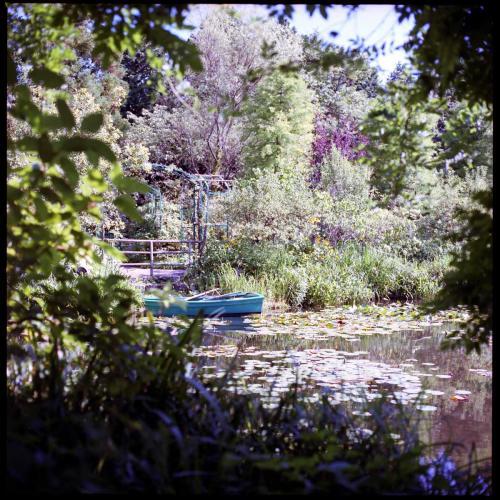 ガーデンミュージアム2 睡蓮