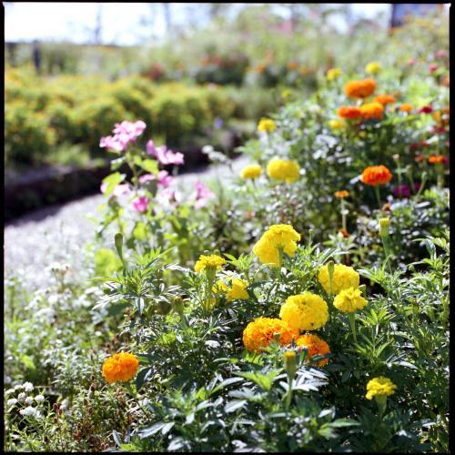 ガーデンミュージアム比叡 花咲く庭園
