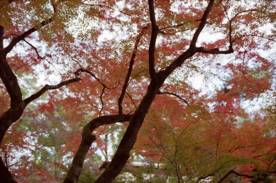 もみじ苑の紅葉1
