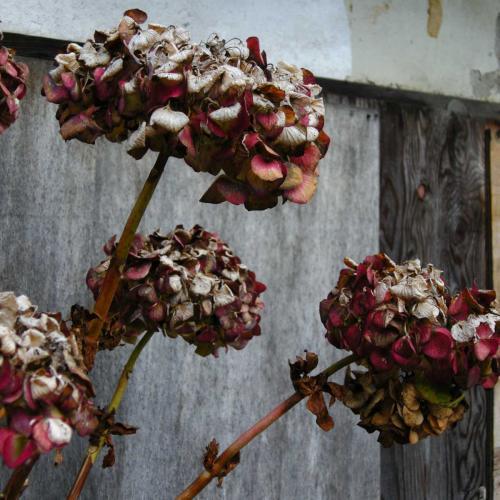 廃墟に咲く枯花