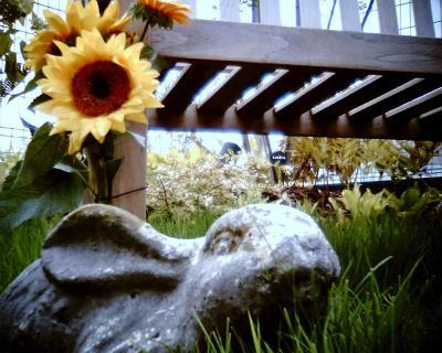 うさぎ庭園