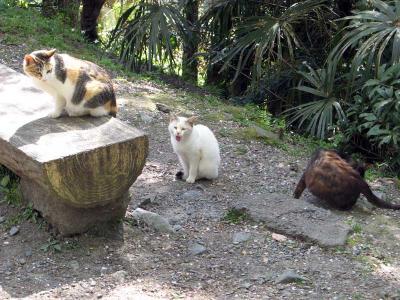 哲学の道南端の猫