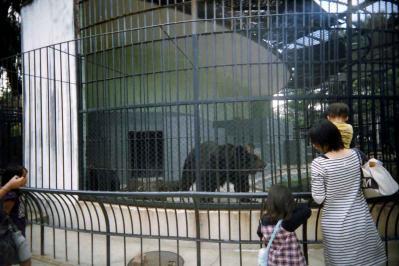 典型的動物園スナップ