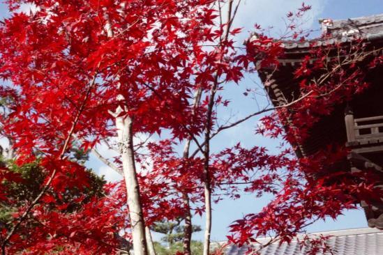 開山堂付近の紅葉