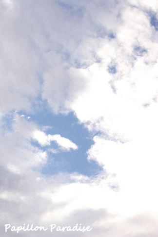 2009060608.jpg