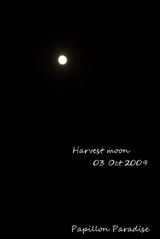 20091003_0513