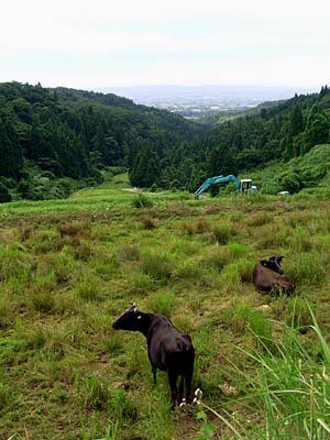 牛と重機と富山平野