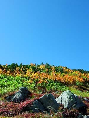 大日岳 頂上への登山道から空を見上げる
