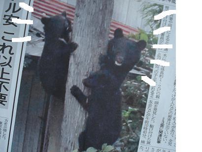 私は熊です