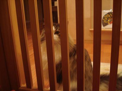主人を待つ猫