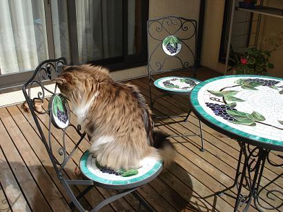 いすで考える猫