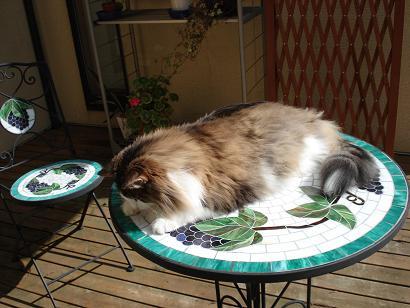 猫は寝るにかぎるねぇ~